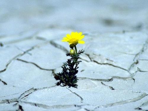 desert_fleur_10a.jpg