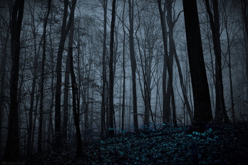 forest-night-dark_2a.jpg