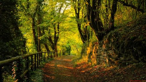 chemin_arbres_19a.jpg