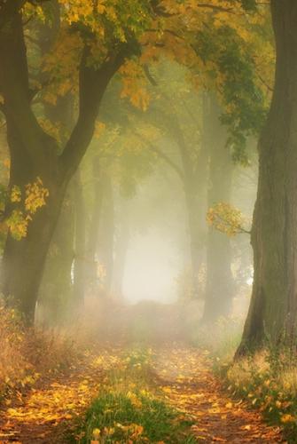 chemin_arbres_44a.jpg