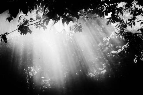 lumiere_arbre_29a.jpg