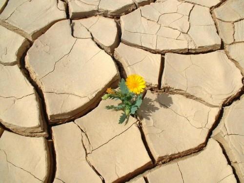 desert_fleur.jpg