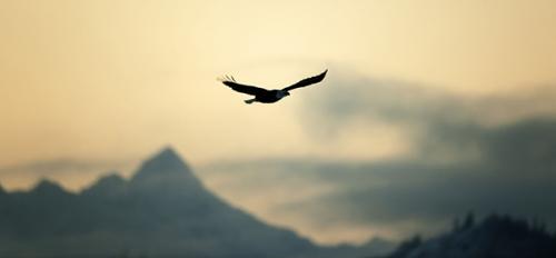 oiseau-ciel_8a.jpg