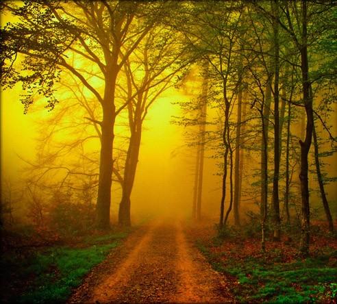 arbres_lumiere_4.jpg