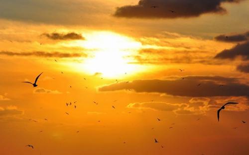 oiseau-ciel_6a.jpg