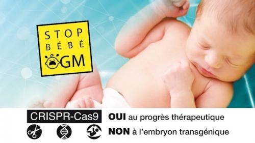 stop-bebe-OGM_a.jpg
