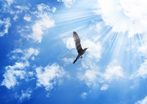 oiseau-soleil-2a.jpg