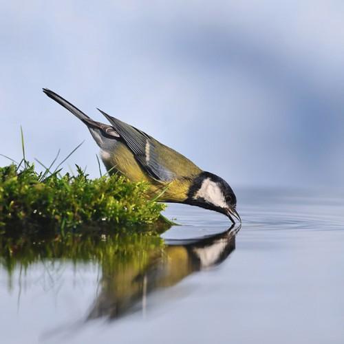 oiseau-eau-a.jpg