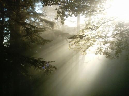 lumière,arbres,raies,rayon,soleil