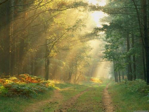 chemin_arbres_13a.jpg