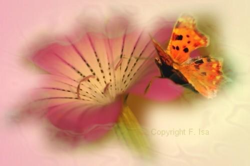 fleur_papillon_2.jpg