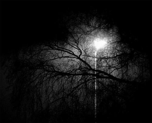 soleil_arbres_3a.jpg