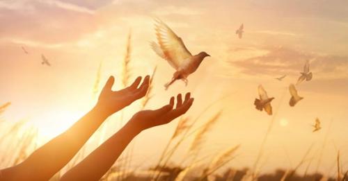 Jacques Philippe,repos,Dieu,travail,stress,réussite,gratuité,contemplation,shabbat,prière,Jésus,foi,espérance,amour,paix