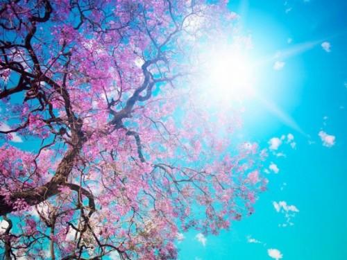 arbre-en-fleurs-2.jpg