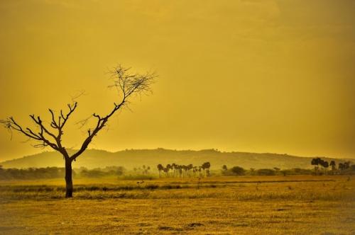 desert_arbre-mort_1a.jpg
