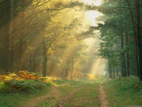 lumiere_arbre_28a.jpg
