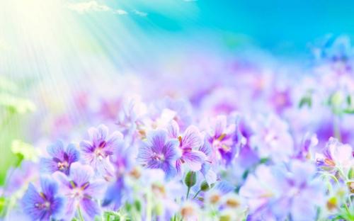 beautiful-summer-flowers_1a.jpg
