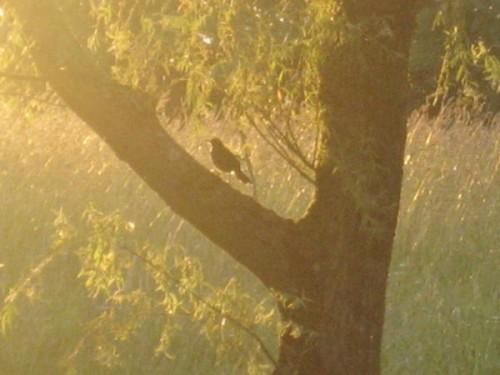 arbre_oiseau.JPG