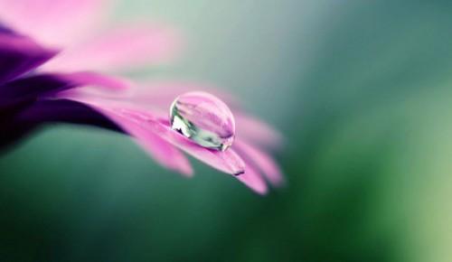 fleur_rosee_a.jpg
