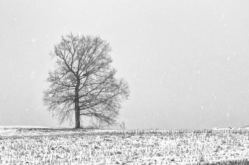 arbre_hiver_1a.jpg