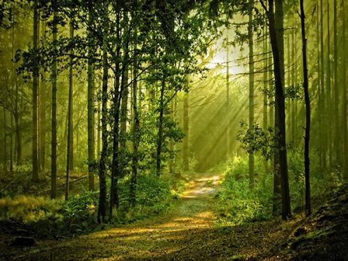 arbres_lumiere_14a.jpg