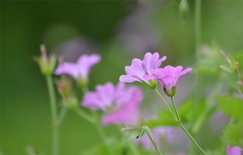 fleurs_douceur_1a.jpg