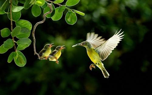oiseaux_1a.jpg