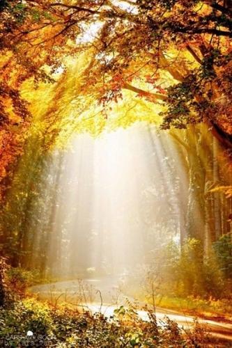 Jean Cassien,grâce,Dieu,travail,labeur,efforts,miséricorde,perfection