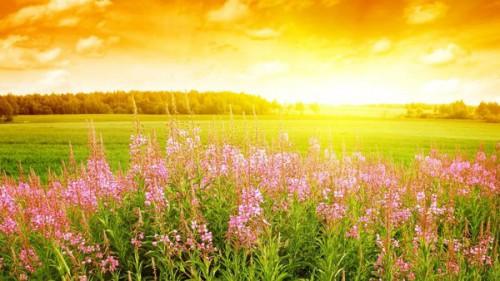 champ-fleurs-soleil.jpg