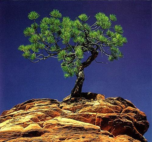 rocher_arbre.jpg