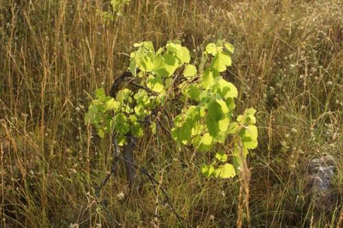 vigne-abandon-a.jpg