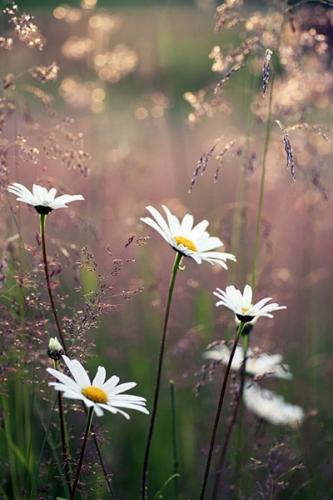 Jean-Nicolas Grou,petites choses,humilité,délicatesse,amour,esprit d'enfance,simplicité