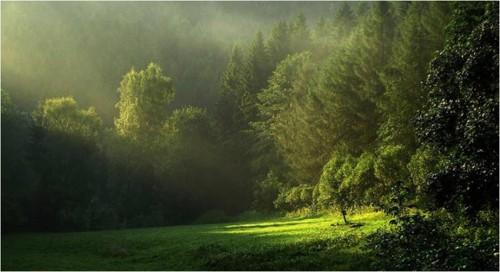 lumiere_arbre_17a.jpg