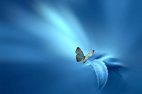 Ste Teresa,Mère teresa,Calcutta,silence,coeur,Dieu,parole,louange,émerveillement,nature