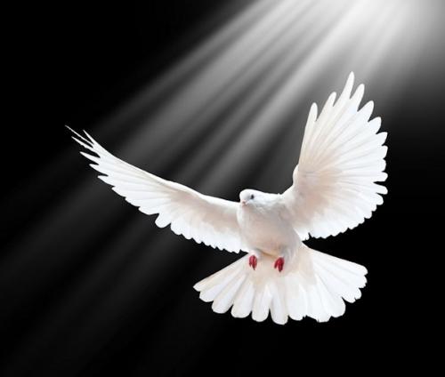 Abbé Hamon,prière,amende honorable,réparation,esprit-saint,saint esprit,résolution,grâces,Trinité,lumière