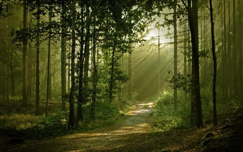 chemin_arbres_25a.jpg