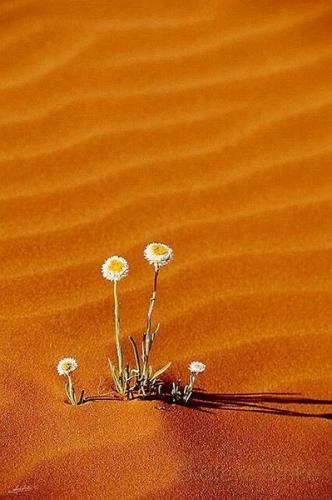 desert_fleur_8a.jpg