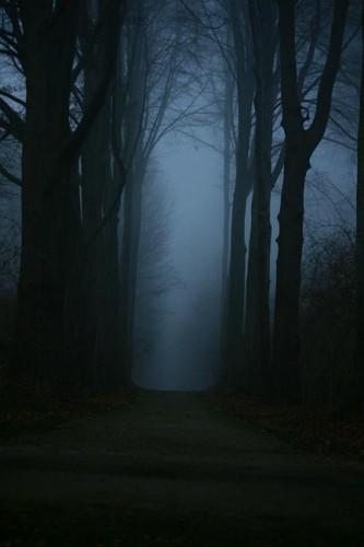 arbres-nuit-a.jpg