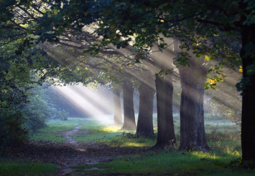 forest-ligh-a.jpg