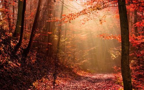 chemin_automne_4a.jpg