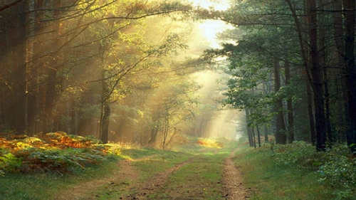 chemin_arbres_35a.jpg