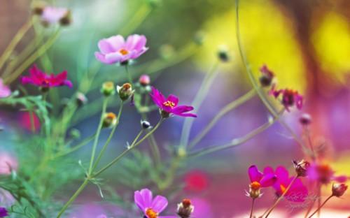 champ_fleurs_6a.jpg