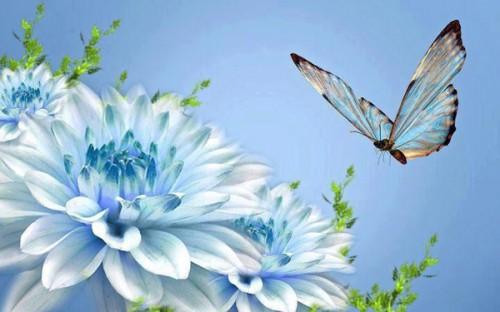 fleur_papillon_5a.jpg