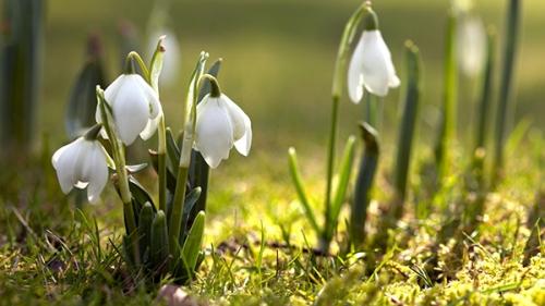 fleurs_blanches_1a.jpg