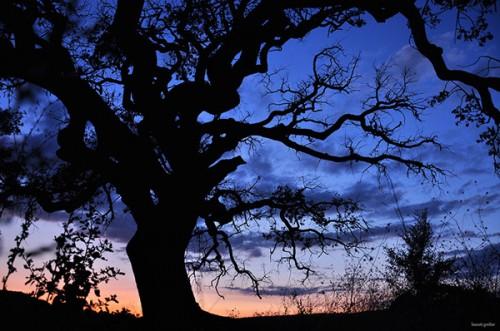 arbre-mort-ciel-a.jpg