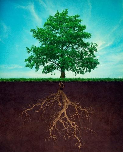 arbre-racines_1a.jpg