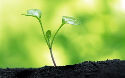 Augustin Guillerand,croissance,prière,prier,tristesse,impuissance,joie,bonté,bonne volonté,tentation,faiblesse,sacrements,Dieu