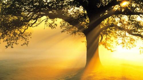arbres_lumiere_9a.jpg