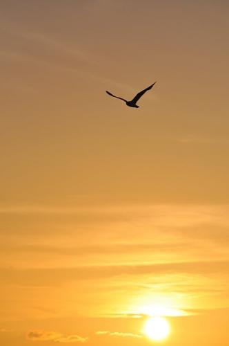 oiseau-ciel_10a.jpg