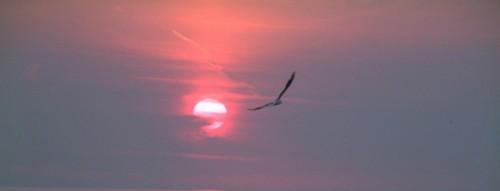 soleil-oiseau-a.jpg